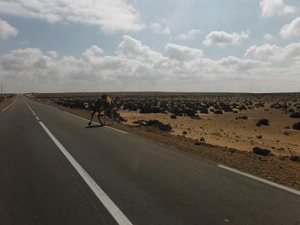 Overstekende kamelen