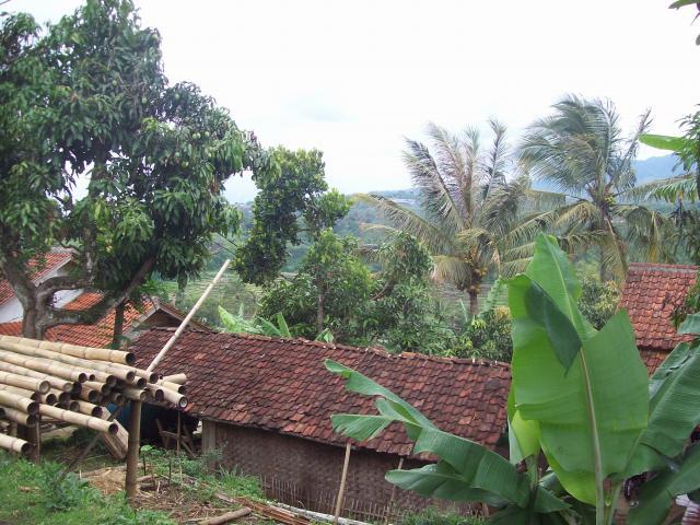 Groene Java, rode pannen