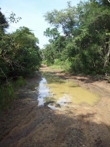 Junglepad