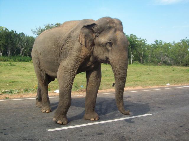 images/srilanka_1672.jpg
