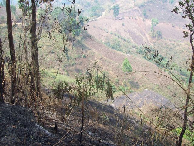 Brandende bossen